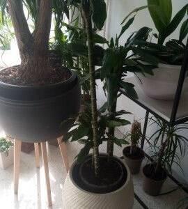 Ariana-maison_et_jardin-vente-plantes-intérieur-et-extérieur-naturel