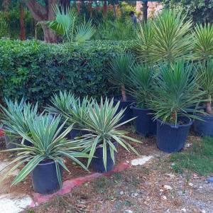 Nabeul-maison_et_jardin-pépinières:-ventes-les-plantes-et-le-gazon